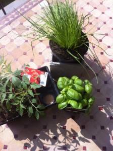 plantations maternelle