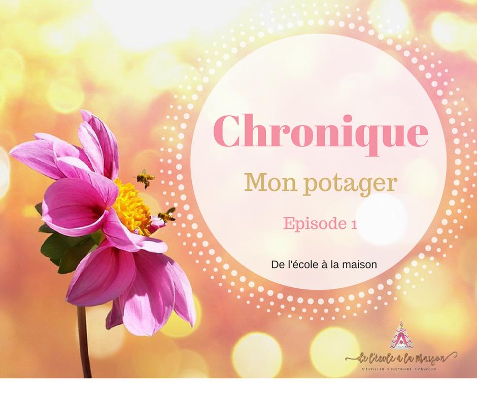 Chronique – Mon potager #1