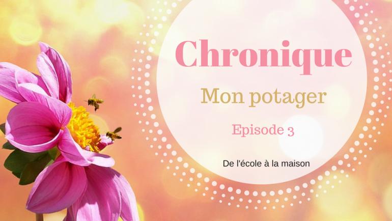 Chronique – Mon potager #3