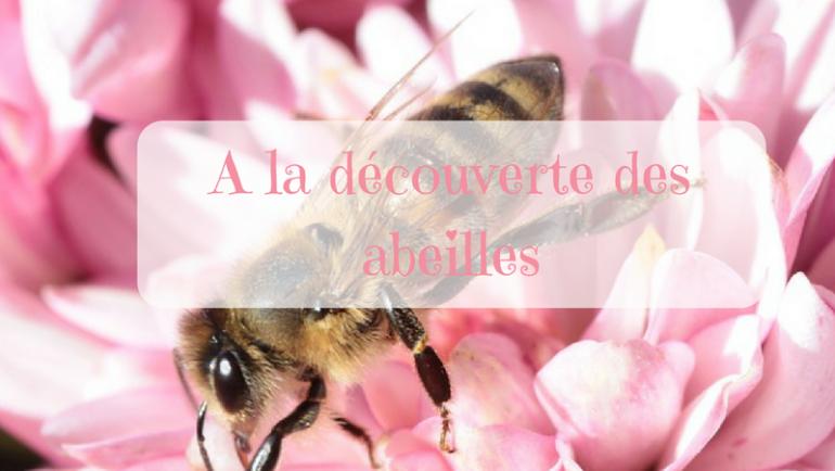 A la découverte des abeilles…