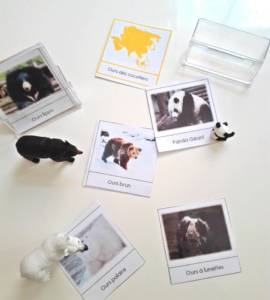cartes ours 2