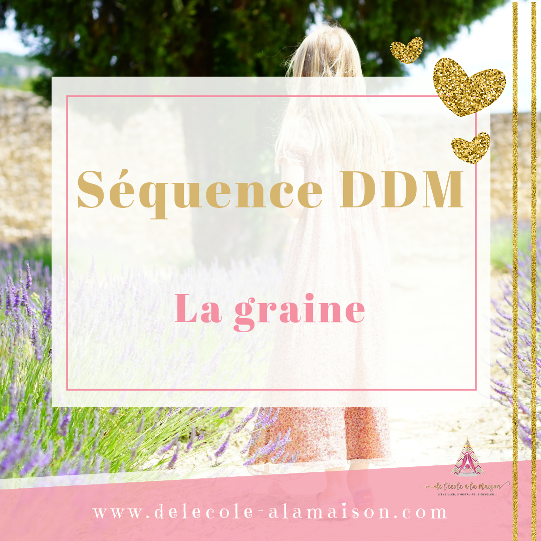DDM – La graine