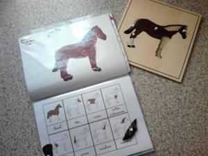 maroc cheval