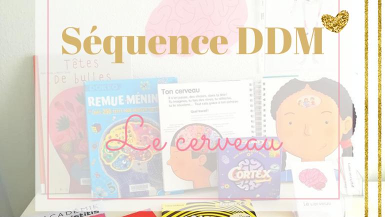 DDM – Le cerveau